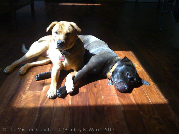 LucidityCoaching Dogs